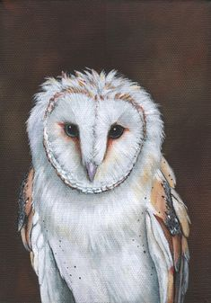 Items similar to Barn Owl Painting - print of owl painting 5 by 7 print - bird art, wall art, home decor on Etsy Cool Paintings, Painting Prints, Wall Art Prints, Watercolor Paintings, Owl Bird, Bird Art, Beautiful Artwork, Beautiful Birds, Owl Print
