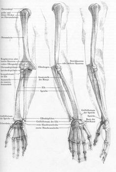 Exceptional Drawing The Human Figure Ideas. Staggering Drawing The Human Figure Ideas. Arm Anatomy, Anatomy Study, Body Anatomy, Anatomy Art, The Human Body, Human Body Parts, Body Reference, Anatomy Reference, Arm Bones