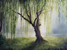 This week I painted a willow tree. It was fun because it was the main (and only) subject. I hope you enjoy it! Willow Tree Art, Willow Tree Tattoos, Kevin Hill Paintings, Forest Painting, Oil Painting Trees, Tree Paintings, Unique Trees, Tree Canvas, Acrylic Painting Canvas