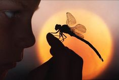 297. The child gazed with wonder at the large dragonfly on his finger and, later, would have sworn that it smiled, quite warmly, at him. #297.