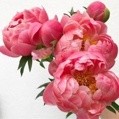 These Peonies 💗 Happy Friday friends x - rosen -