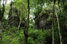 Palenque, ruins in the jungle. | The Hermes' Journey: a ...