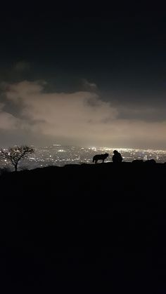 Dog in the mountains of Barcelona