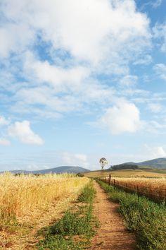 Farm views Vineyard, Country Roads, Paintings, Room, Outdoor, Beauty, Bedroom, Outdoors, Paint
