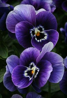 The 48 best flores y plantas images on pinterest beautiful flowers purple flowers or violet flowers are the perfect options for a wedding ceremony home decor or garden small types of purple flower names plants wildflowers mightylinksfo