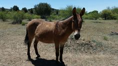 Our neigh bor in Skull Valley. Get it?