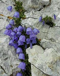 Rock Plants, Nature Plants, Flowers Nature, Small Flowers, My Flower, Garden Plants, Flower Art, Flower Power, Beautiful Flowers