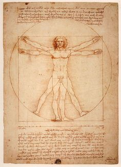Leonardo establece entre las diferentes partes  del cuerpo, que se incluyen en las notas que acompañan al dibujo:  una palma es la anchura de cuatro dedos un pie es la anchura de cuatro palmas un antebrazo es la anchura de seis palmas la altura de un hombre son cuatro antebrazos un paso es igual a cuatro antebrazos la longitud de los brazos extendidos es igual a su altura