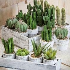 Gracie Oaks 4 Piece Cactus Desktop Plant in Tray Set Base Color: Gray Cactus Plant Pots, Fern Plant, Cactus Decor, Plant Decor, Succulent Landscaping, Planting Succulents, Succulent Arrangements, Plant In Glass, Artificial Boxwood