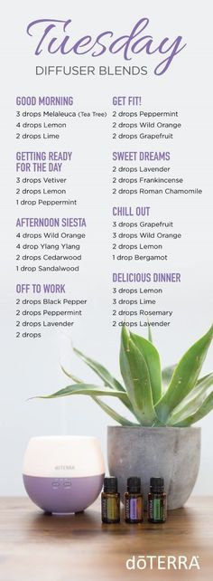 Learn how to start as a dōTERRA WELLNESS Advocate or buy as a Wholesale Member Happy Tuesday! Here are diffuser blends that are perfect for your whole day!