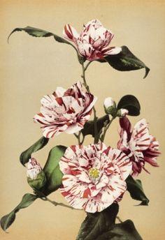gallery-bloom21 | lidewij edelkoort