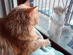 Romancing The Chocolate: Funny Odd Couples: Cats and Their Weirdo Friends
