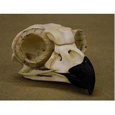 owl skull