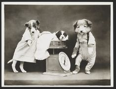 GRANNY ENCHANTED'S BLOG: Interesting Animal Images Harry Whittier Frees Animal Photography -Vintage Puppy Photo