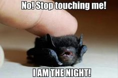 Cutd little bat