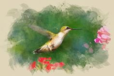 Hummingbird Watercolor Art by Christina Rollo © www.rollosphotos.com.  Ruby-Throated Hummingbird in flight with flowers. A digital watercolor technique was used to create this artwork from an original photograph. #bird #animal #hummingbird #art #decor #rollosphotos