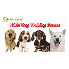 Dog Training School, Dog Training Courses, Dog Training Videos, Animal Reiki, Spiritual Animal, Cat Pee, Dog Feeding, Free Dogs, Happy Animals