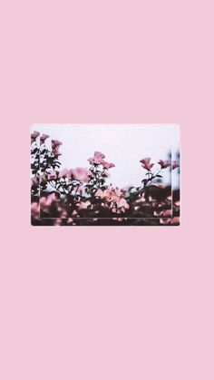 Pink wallpaper, cool wallpaper, lock screen wallpaper, wallpaper for your phone, Mood Wallpaper, Aesthetic Pastel Wallpaper, Cute Wallpaper Backgrounds, Tumblr Wallpaper, Pink Wallpaper, Colorful Wallpaper, Flower Wallpaper, Wallpaper Quotes, Aesthetic Wallpapers