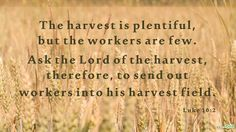 """The harvest is plentiful, but the workers are few. Ask the Lord of the harvest, therefore, to send out workers into his harvest field."" (Luke 10:2)"