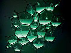 Lâmpadas biológicas constituída de bactérias não gastam energia elétrica.