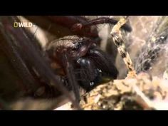 ▶ National Geographic Super Spider - Fascinating Spider Documentary - YouTube