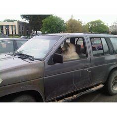 Hey buddy you took my parking spot!!