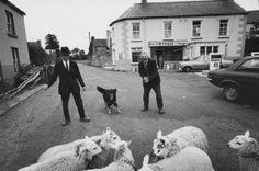 A farmer takes his sheep to fair day in Drumkeerin, County Leitrim, Ireland, 1973.