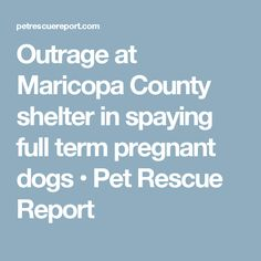 Outrage at Maricopa County shelter in spaying full term pregnant dogs • Pet Rescue Report