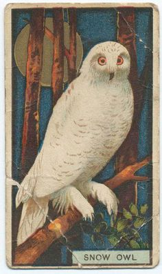 Snow owl tobacco trading card.  My dad smoked the cigars and gave me the cards.  Wish i still had them.