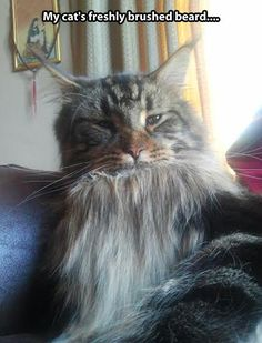Bearded cat…