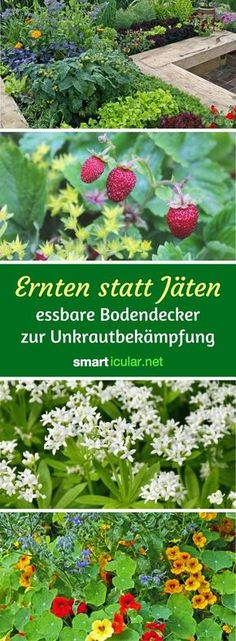 60 Best Garten Pflanzen Images On Pinterest Outdoor Plants Garden