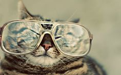 Cool-Cat-Picture-16.jpg (1600×1000)