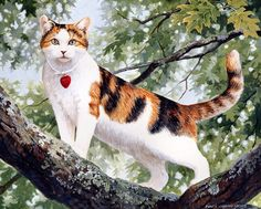 Коллекция картинок: Persis Clayton Weirs, и не только котята!