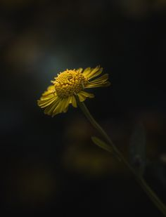 Photograph Follow Your Path by Paul Barson on 500px
