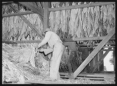 tobacco farmers historic images | Kentucky Farmers Go Online for New Farming and Business Options