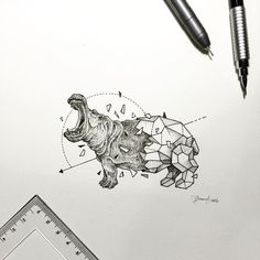 drawings of wild animals Art amp Design Pinterest