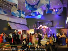 Think outside the #banquet hall box and host your #prom at the Florida Museum of Natural History!