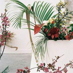 Camile Henrot — ikebana installation