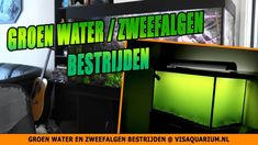 Groen water en zweefalgen in zoetwater aquarium bestrijden Aquarium, Flat Screen, Water, Seaweed, Blood Plasma, Water Water, Aqua, Aquarius, Fish Tank