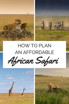 Africa includes a safari for every and each and every traveller - what will your trip narrative be? African safari prepared tours and bundles range between pail-series activities to extremely-top quality Kenya, Places To Travel, Travel Destinations, Vacation Travel, Hawaii Travel, Holiday Destinations, Chobe National Park, Foto Poster, Tanzania Safari