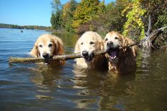 Big Stick to share ..Tyler, Bentley and Brie in White Lake Ontario