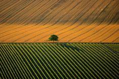 YannArthusBertrand2.org -  Paysage agricole près de Cognac, Charente, France (45°42' N – 0°13' O).