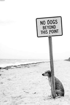 """No dogs beyond this point!  The dog must have a teacher for a """"mom"""" because he can read and follow directions."""
