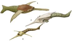 "Prehistoric taxonomie | 1.Doryaspis arctica (""dart shield"")..."
