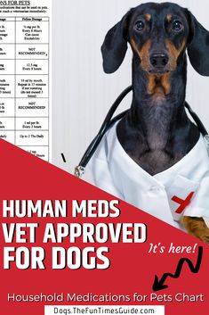A list of acceptable household medications for pets, according to veterinarians. Plus the correct doses for dogs & cats. Before giving your dog medications from your medicine cabinet, be sure to check this list of human medicine safe for dogs first! Meds For Dogs, Medication For Dogs, Dog Meds, Safe Medications For Dogs, Medication List, Dog Health Tips, Pet Health, Medicine Safe For Dogs, Quotes Fighting