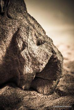 La lumière est un caillou endormi le sable émouvant qui agrège nos avenirs la maman immortelle des aubes aveuglantes la lumière est la lionne dont je suis la proie j'aime sa chaleur quand elle ouvre ses yeux. BT