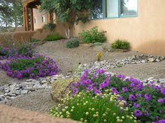 Xeriscape dry river bed and plants