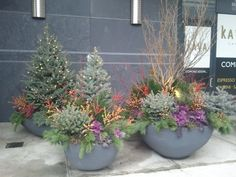 Gorgeous winter containers with up-lighting  In NYC
