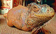 #Drago #imissyou #restinpeace #wemissyou #iguana #rediguana
