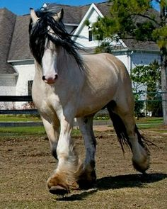 I want this horse... *loving sigh*